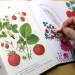Dal mio sketchbook: disegni fioriti e fruttati!